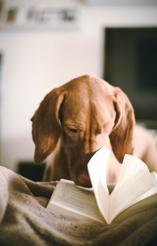 Surprising Facts About Dogs: 6 Books To Choose