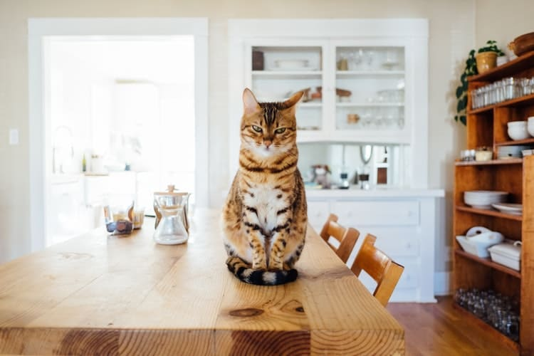 Facts About Cats: 6 Interesting Stories From Our Furry Friends