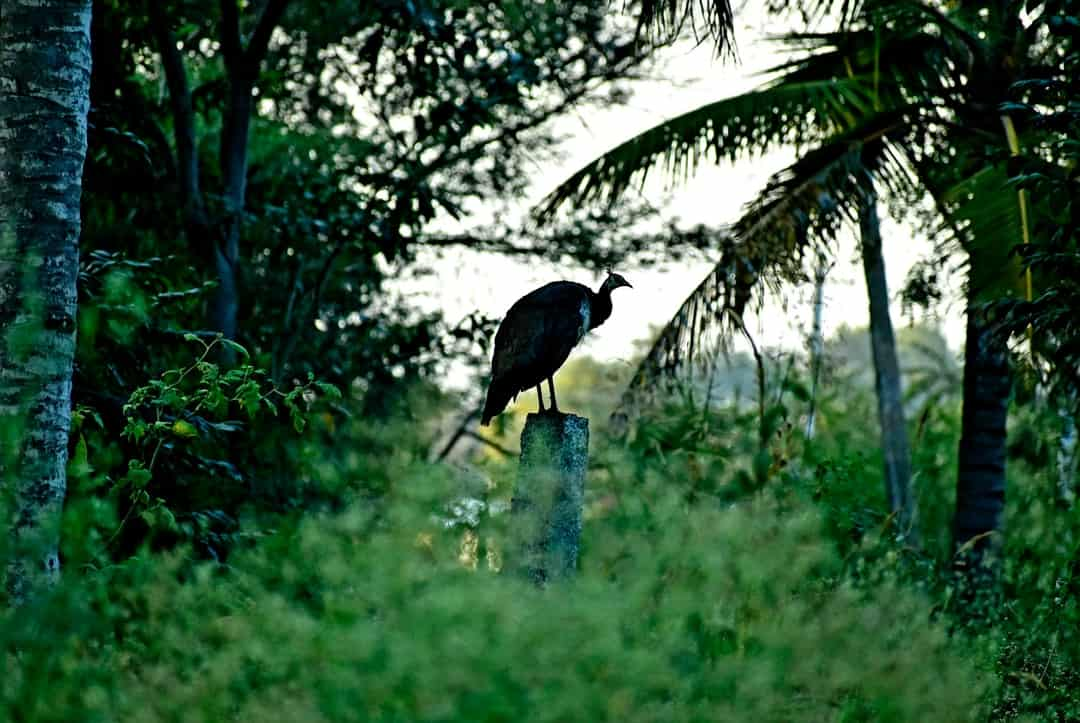 A bird perched on top of a tree