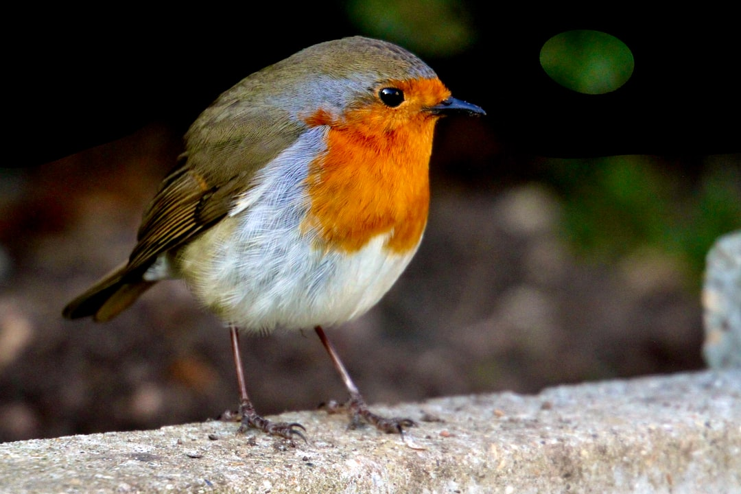 A small bird sitting on a wooden surface