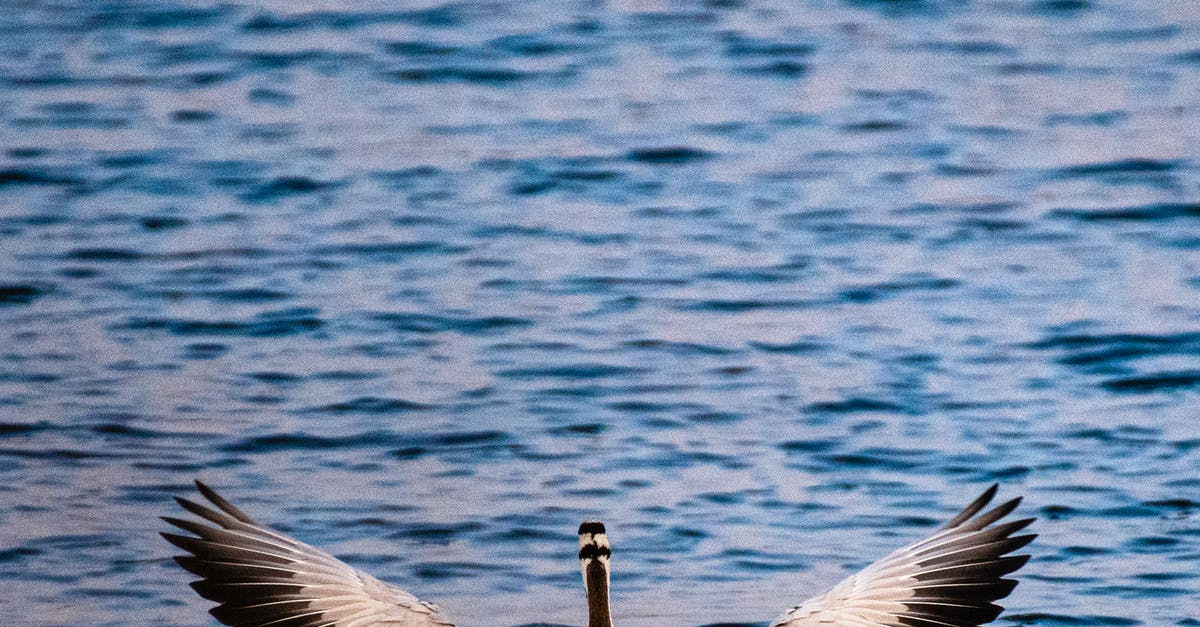 A bird flying over the water