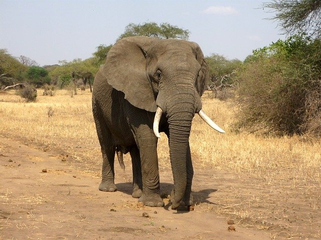 A small elephant standing on top of a dirt field
