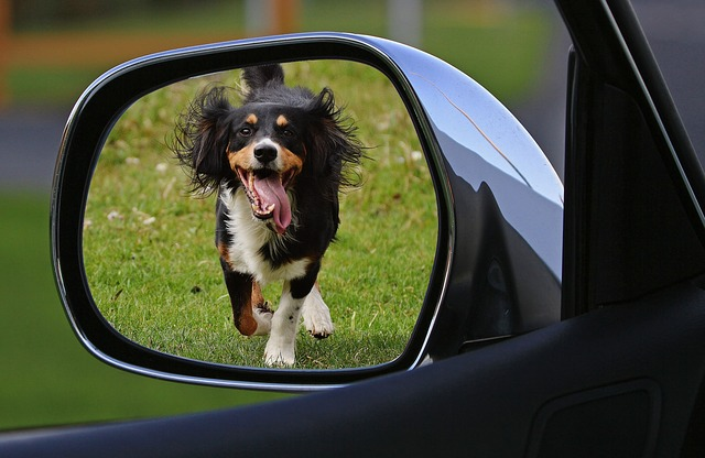 A dog hanging out the side view mirror of a car