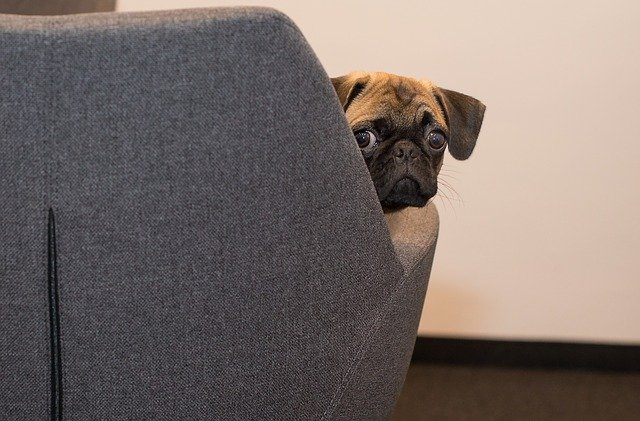 A dog sitting on a couch